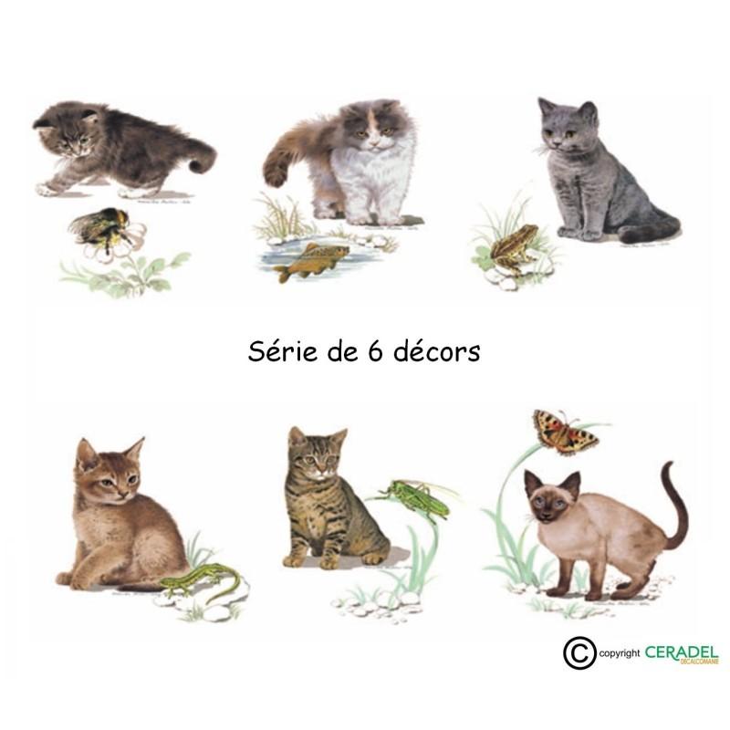 SERIE DE 6 CHATS