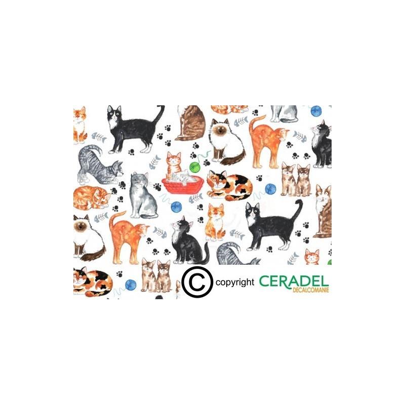 CAT CHINTZ DIM.50X70