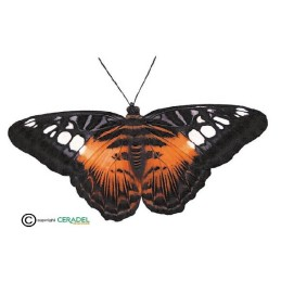 PAPILLON ORANGE ET NOIR