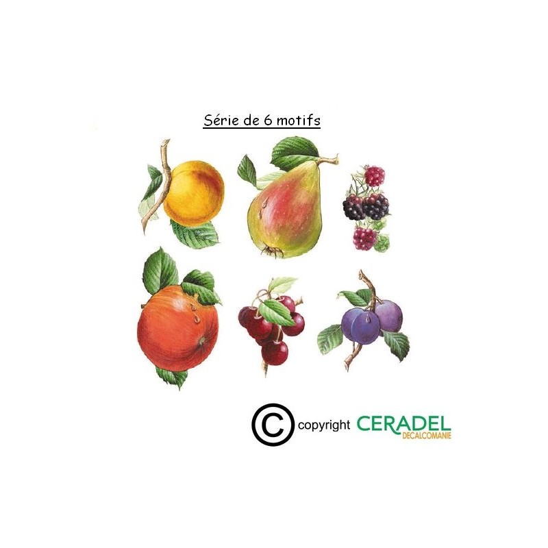 SEMIS DE 6 DECORS