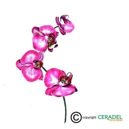 ORCHIDEE ROSE ET VERT