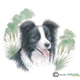 BORDER COLLIE**